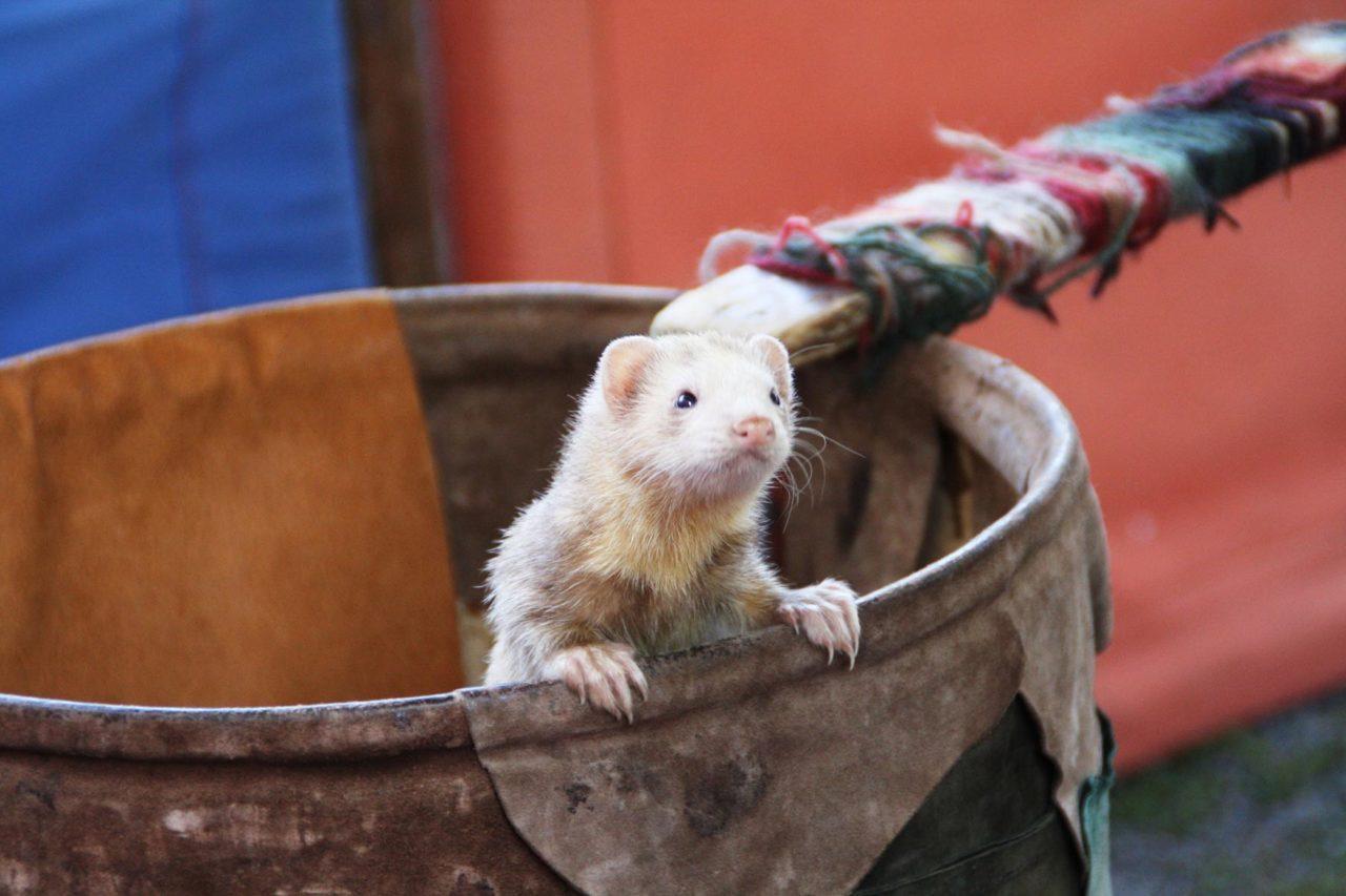 Tiere zum Mittelaltermarkt